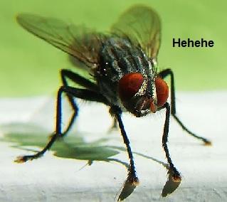 moscas-como-espantar